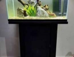 Big Fish tank (55 gallon aquarium )
