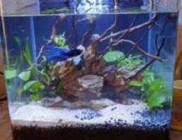 Planted aquarium with fishes